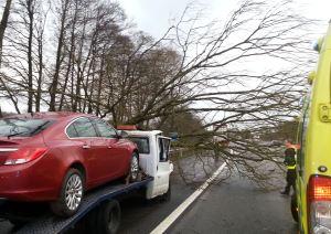 M6 Tree fall 2
