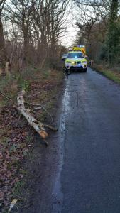 WOMAN INJURED BY FALLING TREE - 28.01.14