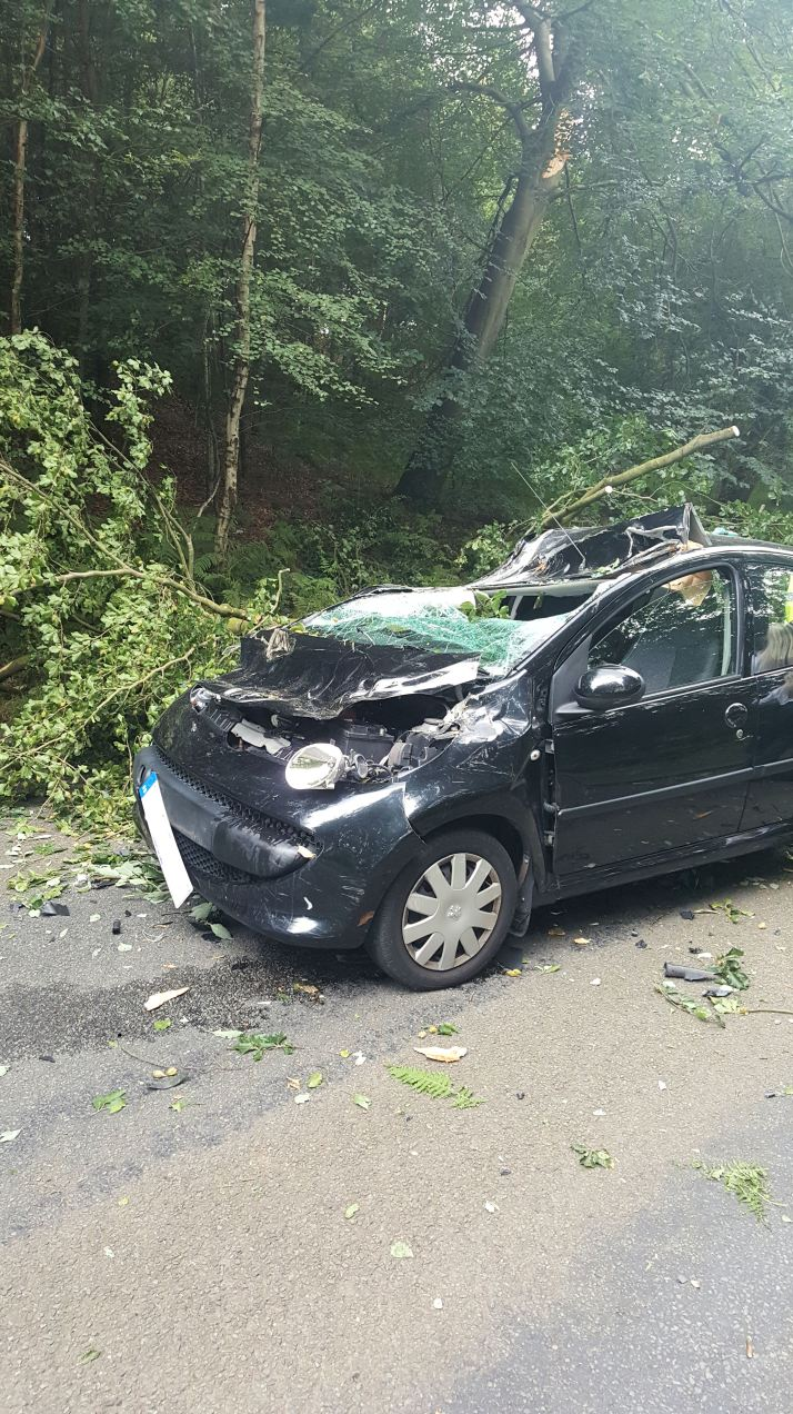 Tree Through Car 1 (25-07-16) - side