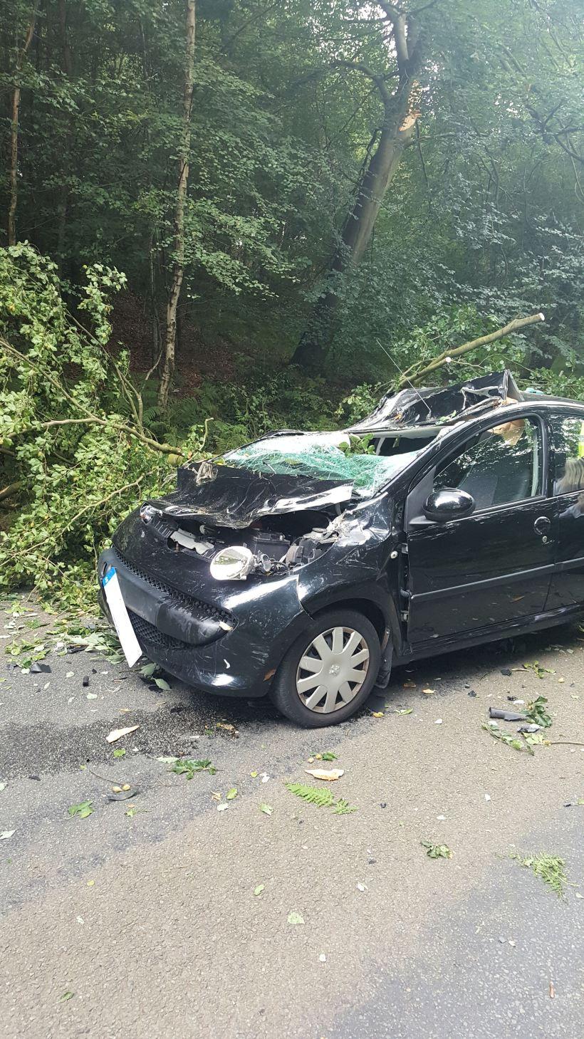 Tree Through Car 1 (25-07-16) - side