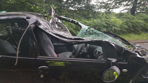 Tree Through Car 2 (25-07-16)