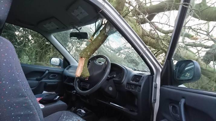 tree-down-11-1-17-5